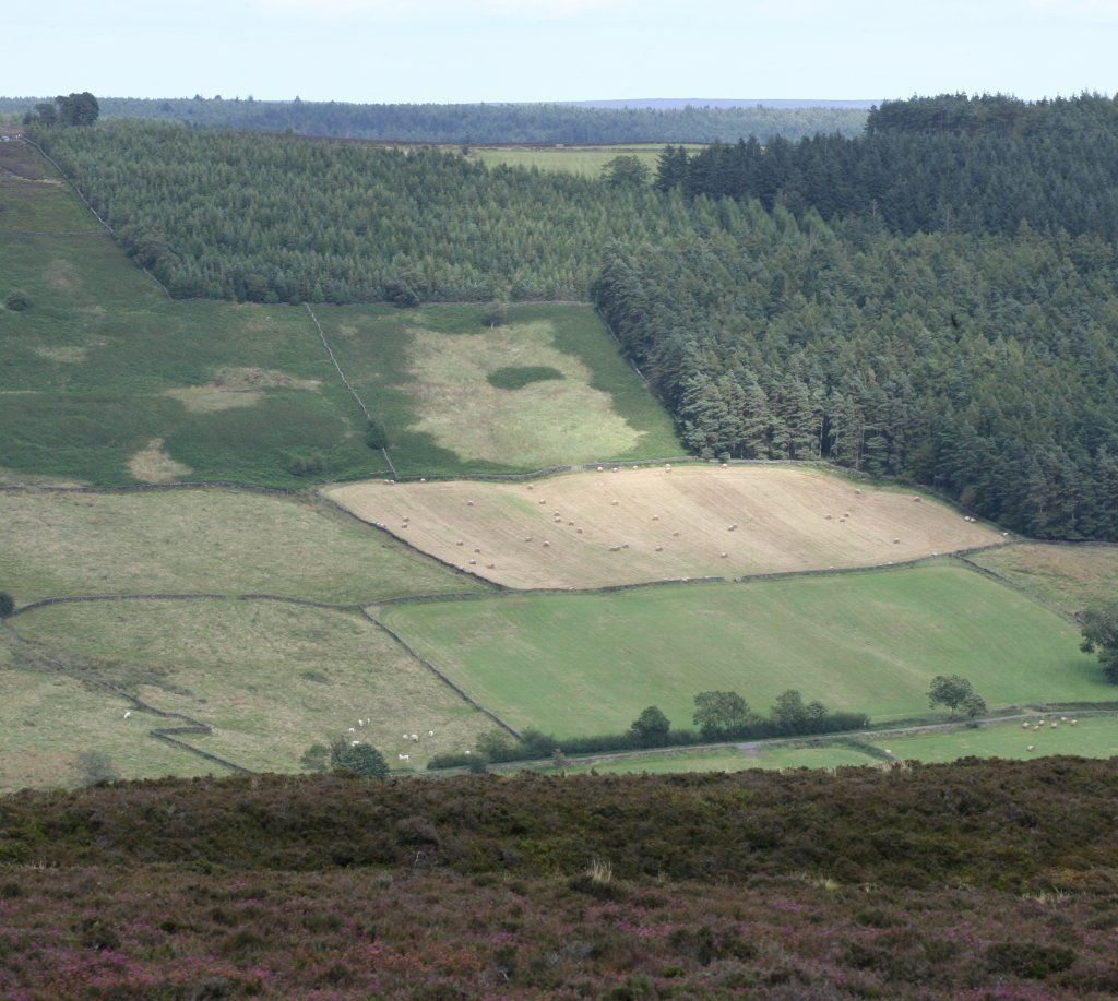 View from Chimney bank